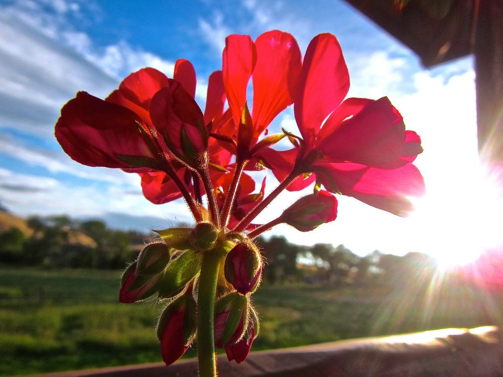 Flowerful Morning