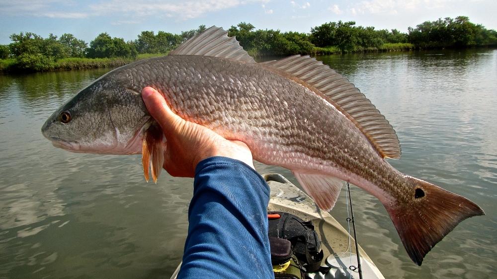Slot Redfish