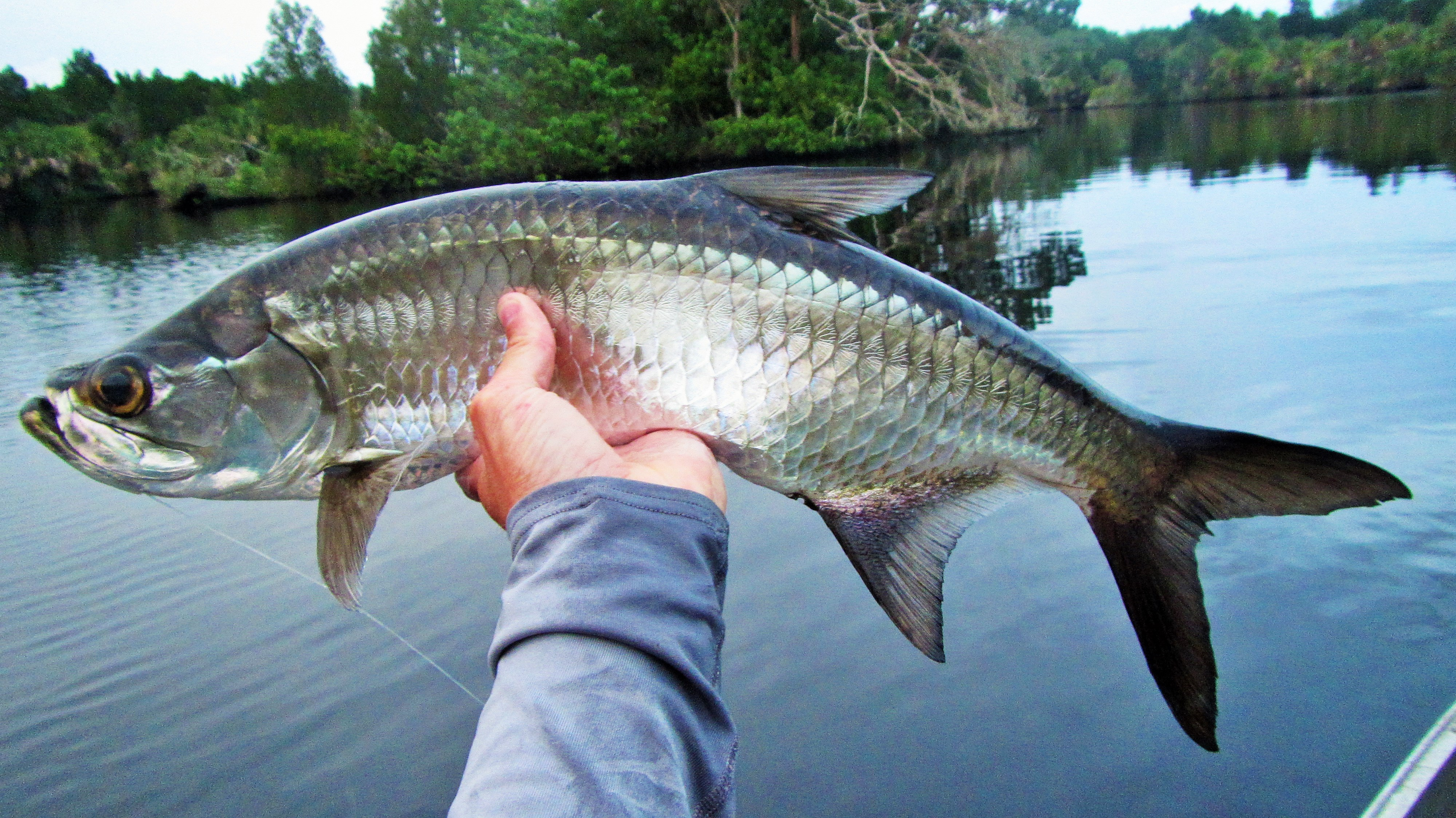 Tarpon backwater fly fishing for Indian river inlet fishing tips