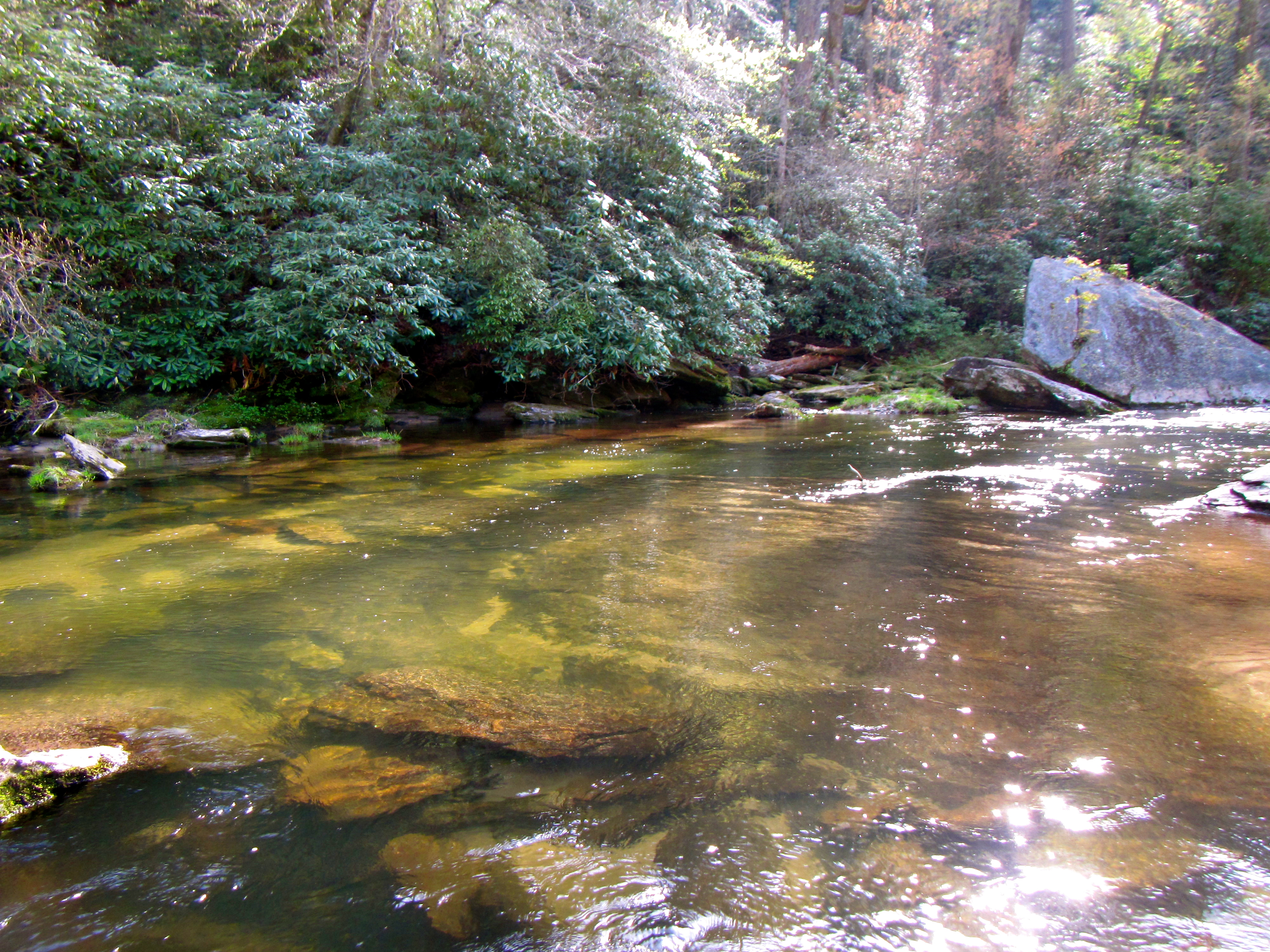 Fly fishing wild brown trout backwater fly fishing for Trout fishing spots near me