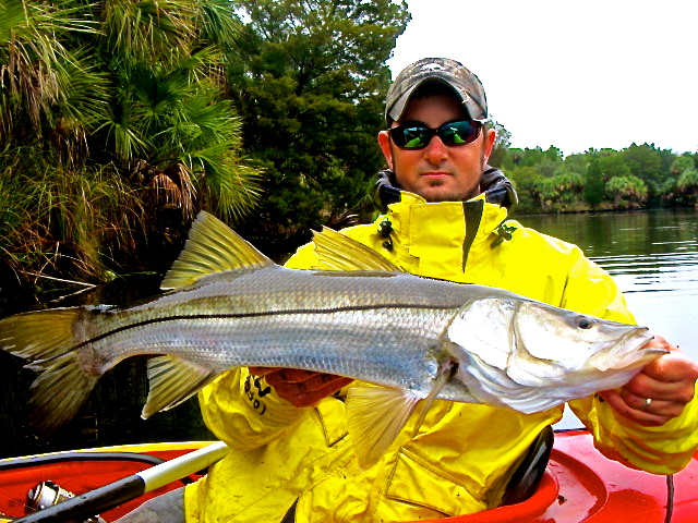 Big West Coast Snook