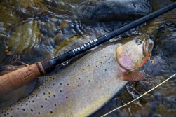 Cutthroat Trout Fishing Wyoming