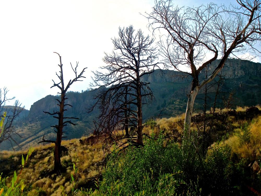 Post Burn Trees