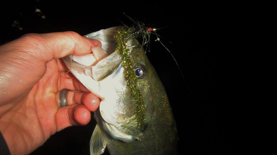 2lb Bass on a Chenille worm.
