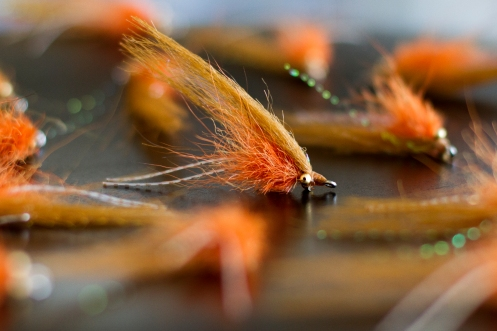 Backwater's Micro Shrimp