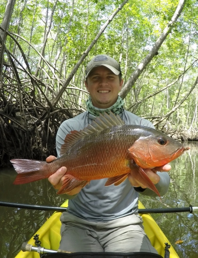 Snapper on the Fly
