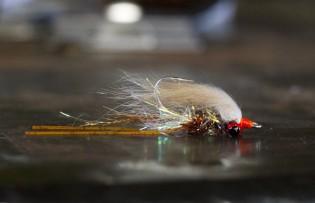 Crystal River Shrimp