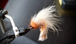 flies for costa rica