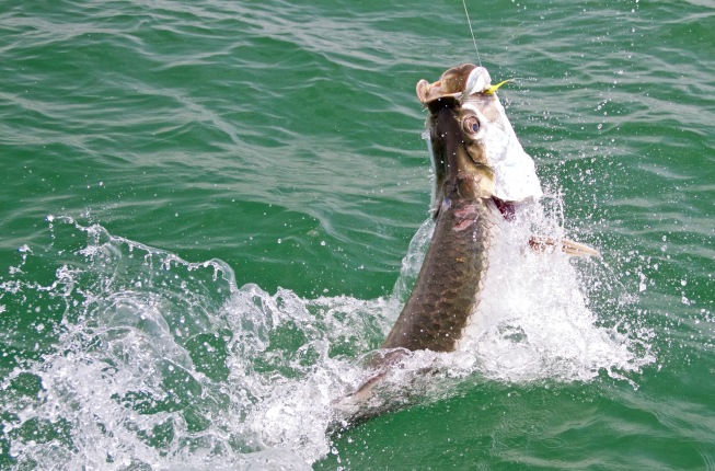 Tarpon Fishing Costa Rica