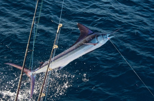 FADs Fishing Costa Rica Marlin On The Fly