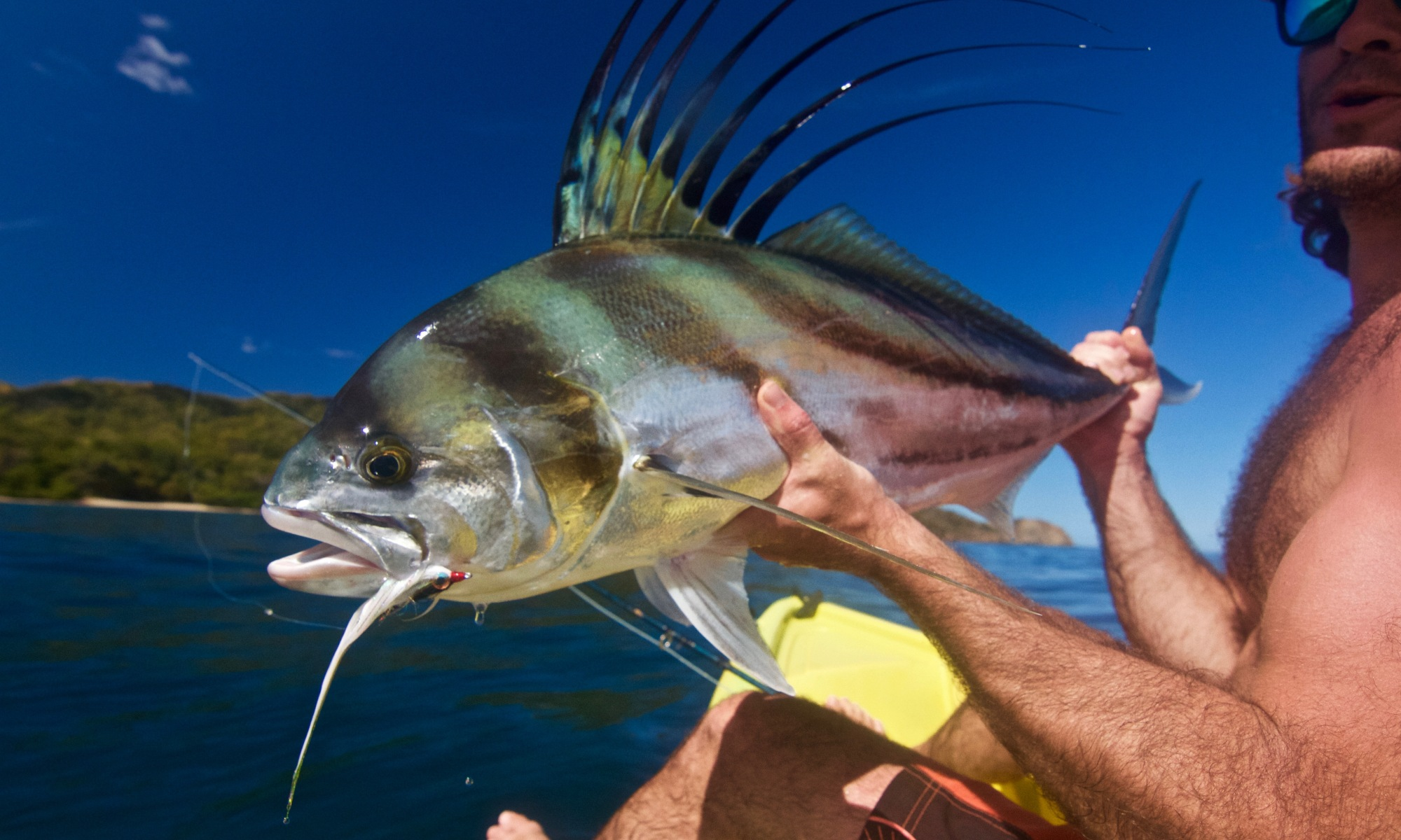 roosterfish on the fly costa rica