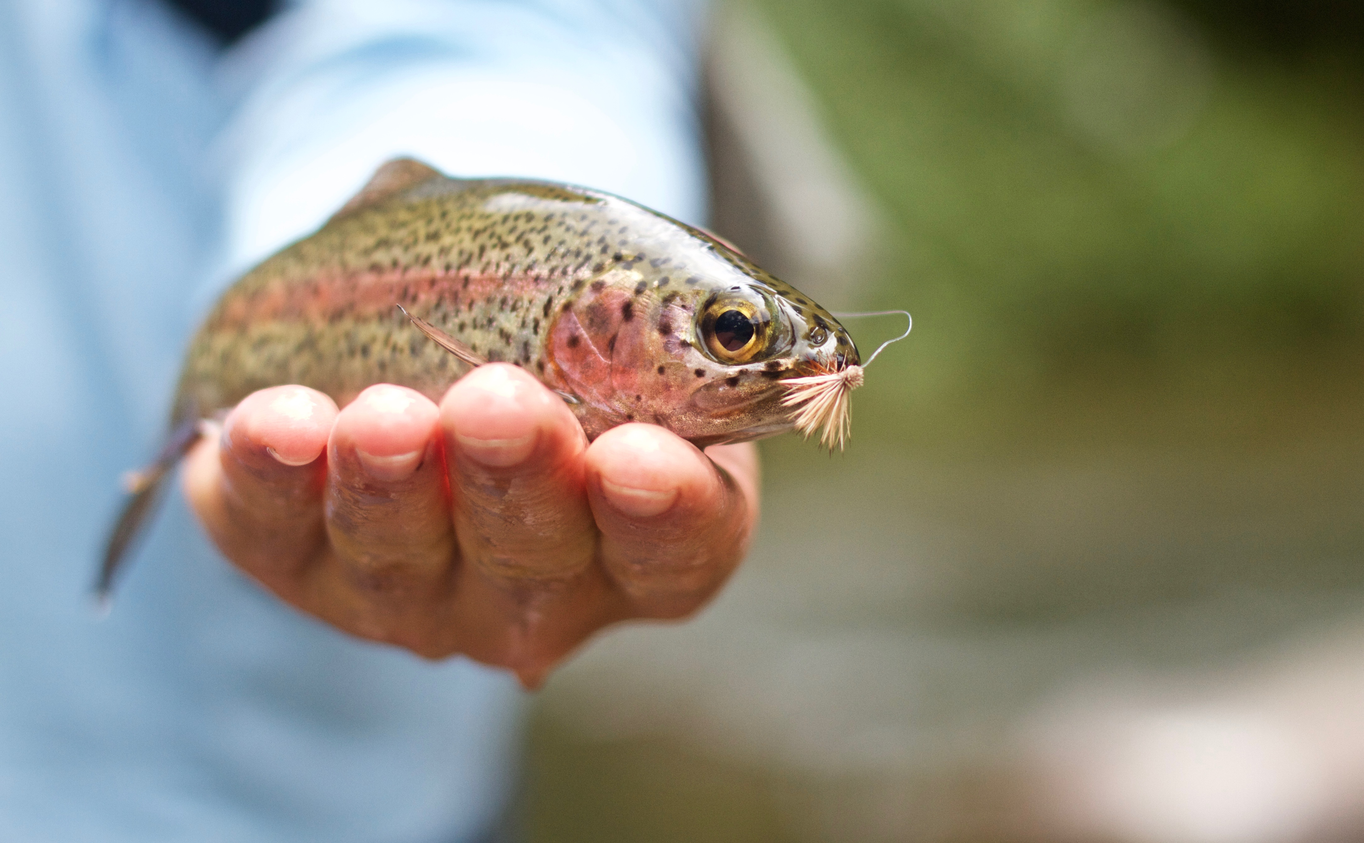 fly fishing for trout in costa rica