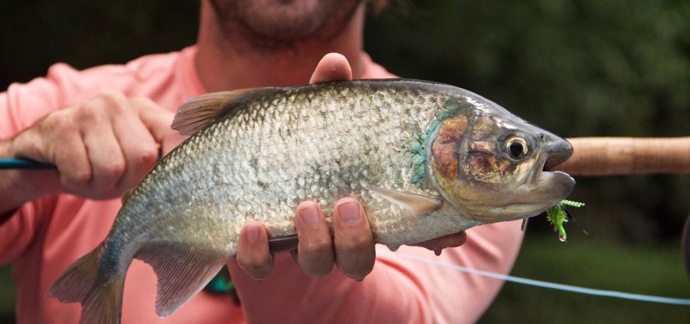 fly fishing machaca costa rica