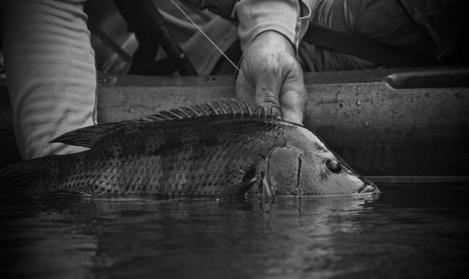 guapote fishing costa rica