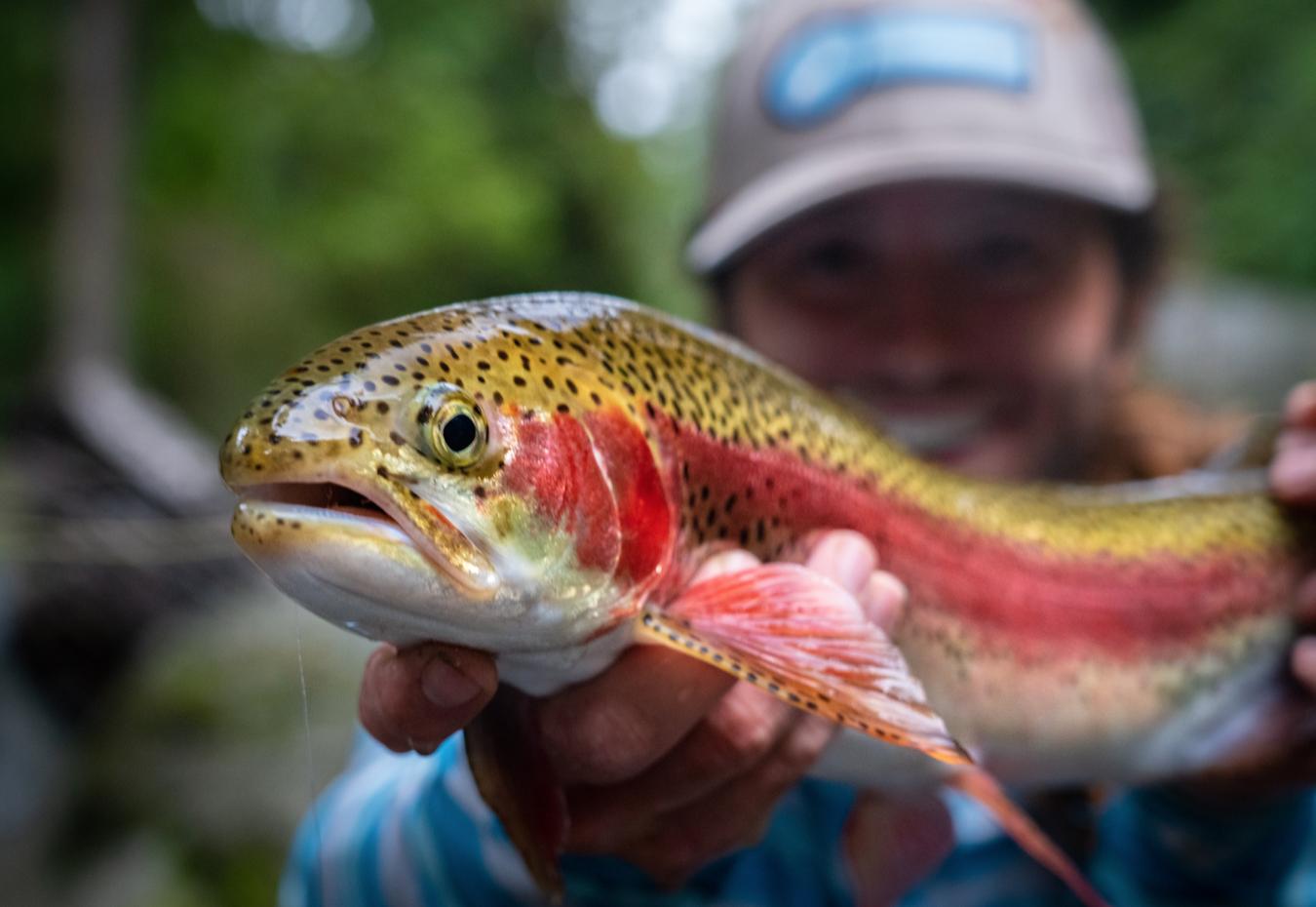 rainbow trout fishing costa rica