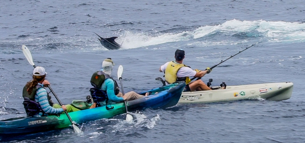 kayak fishing for marlin